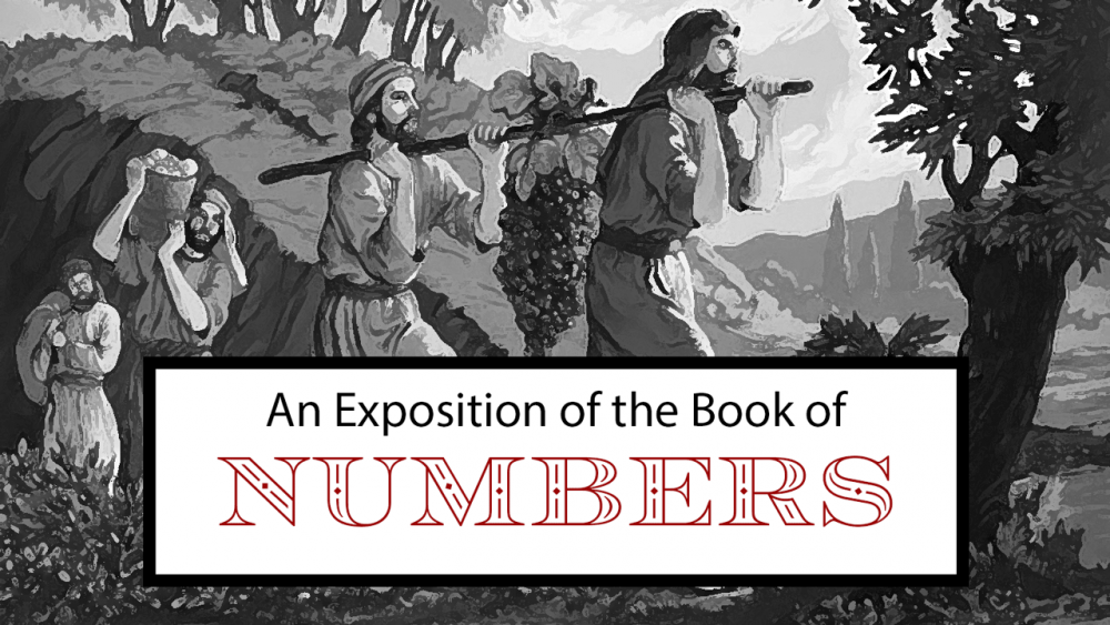 An Exposition of Numbers